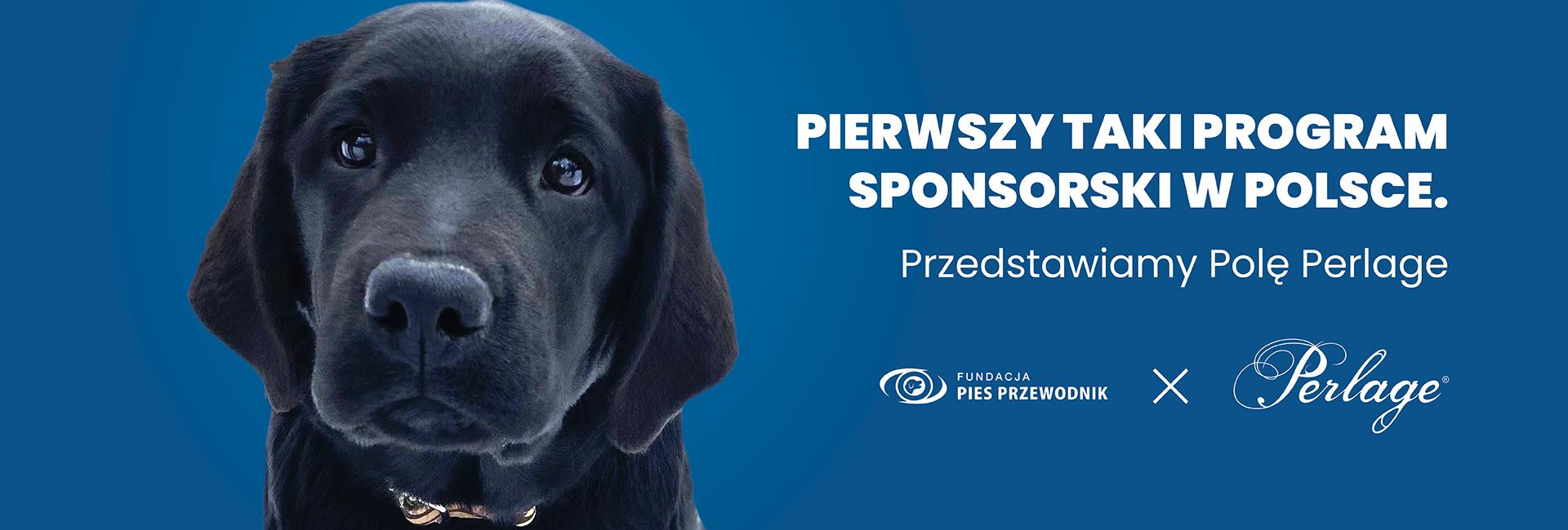 """Plakat z czarnym szczeniaczkiem i napisem """"Pierwszy taki program szkoleniowy w Polsce. Przedstawiamy Polę Perlage"""""""