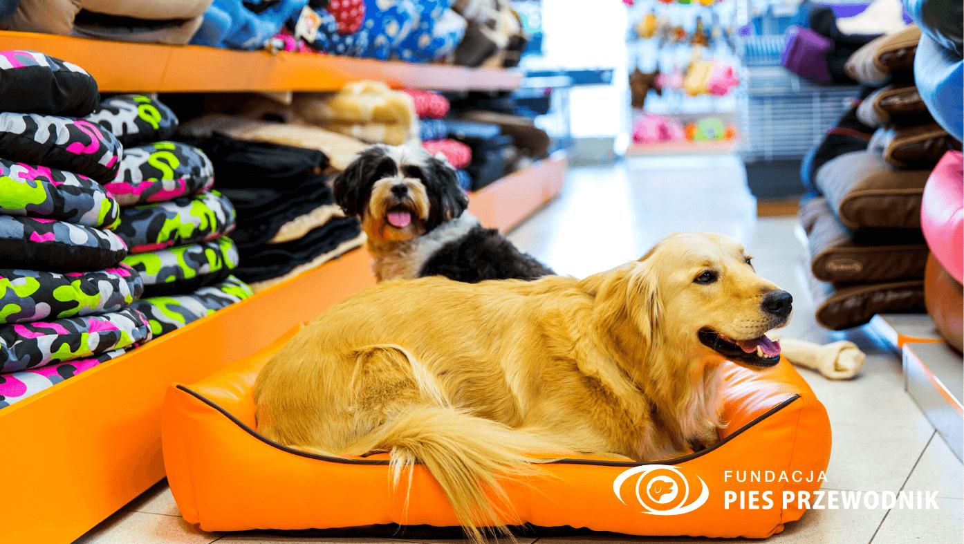 Sklep zoologiczny. Alejka z legowiskami dla psów. Na środku leży pomarańczowe posłanie do psa, a na nim leży zadowolony golden retriever