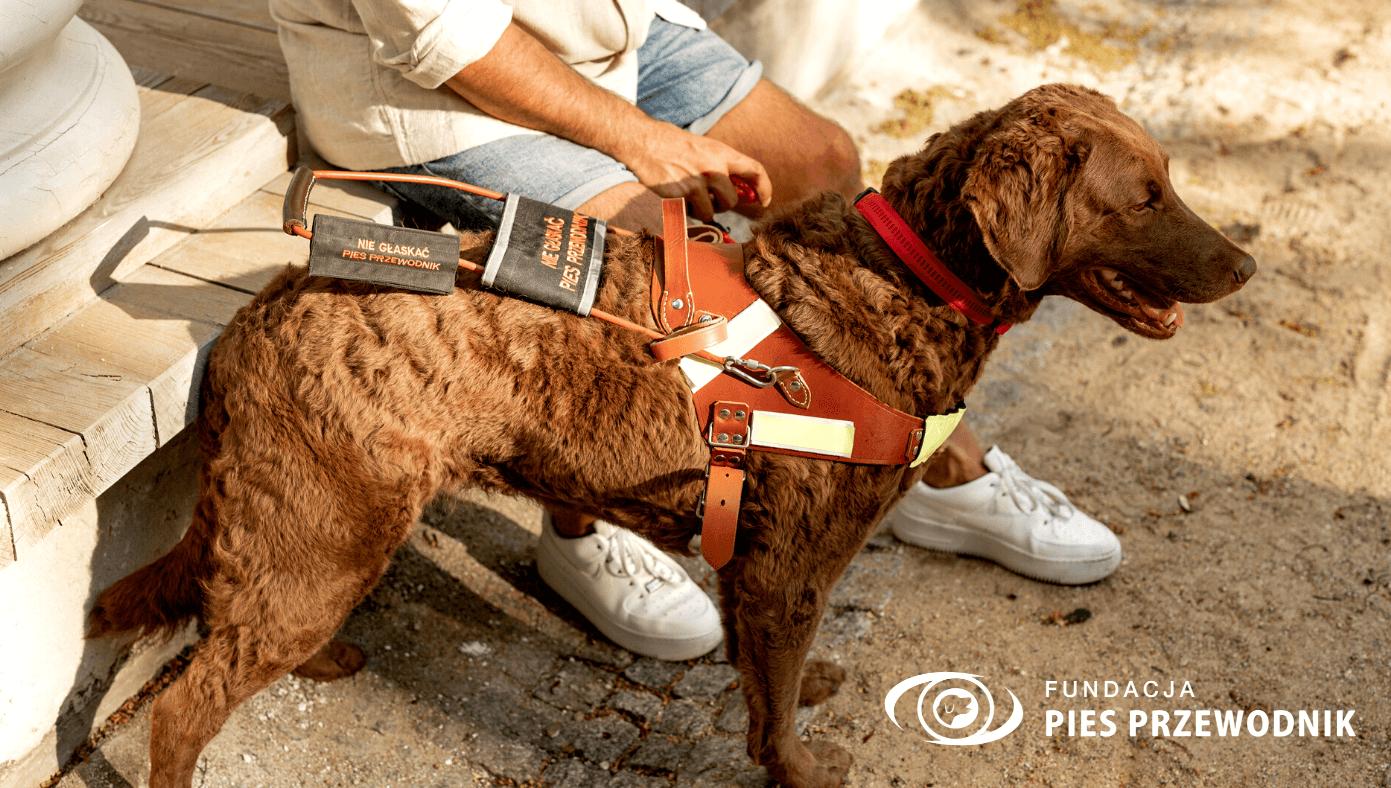 Pies przewodnik prezentuję specjalistyczną uprząż. Jest ona wykonana ze skóry i zawiera odblaskowe elementy